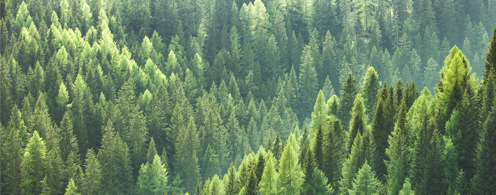 Forest – Environment and Sustainability